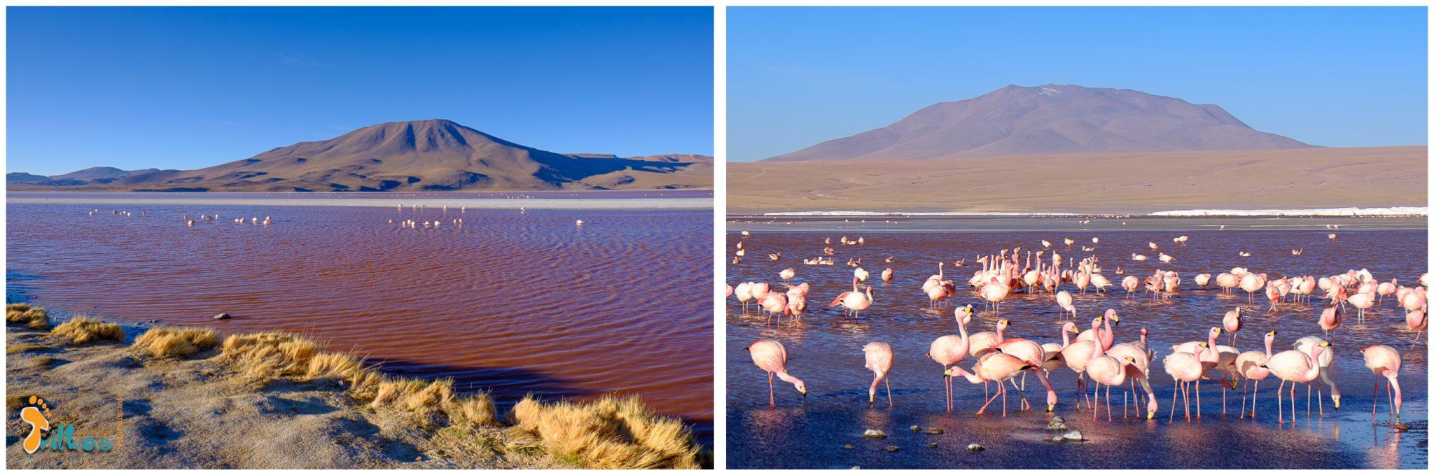 03 - lagunas altiplanicas - bolivia-laguna colorada