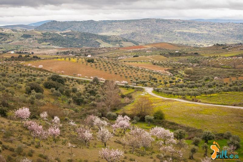 Rota das Amendoeiras em Flor-6